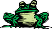 Toad_C